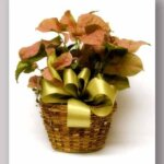 Easy Care Green Plant Basket