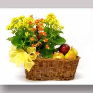 Fruit Basket with Potted Plants