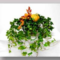 Ivy Basket with Seasonal Accent