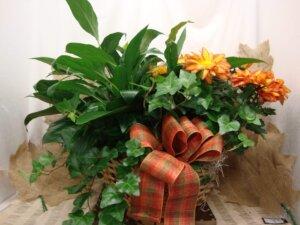 Sympathy Arrangements & Plants